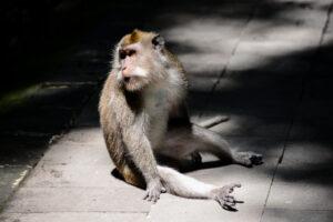 В Индии обезьяна взломала банкомат