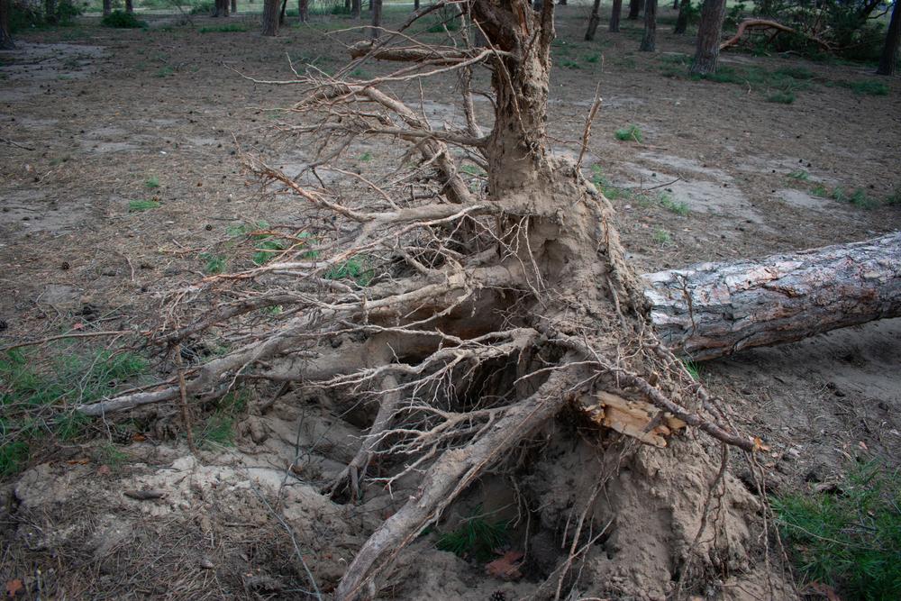 В Забайкалье ураган чуть не унес детей