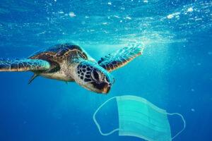 В Рио возле аэропорта заметили морских черепах
