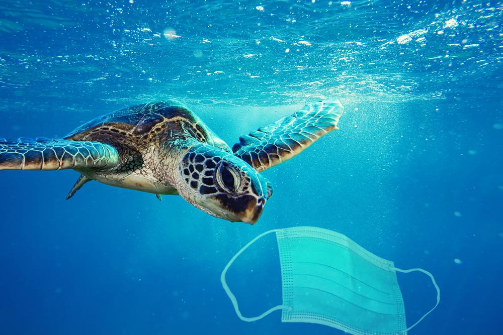 В Рио возле аэропорта заметили морских черепах.Вокруг Света. Украина