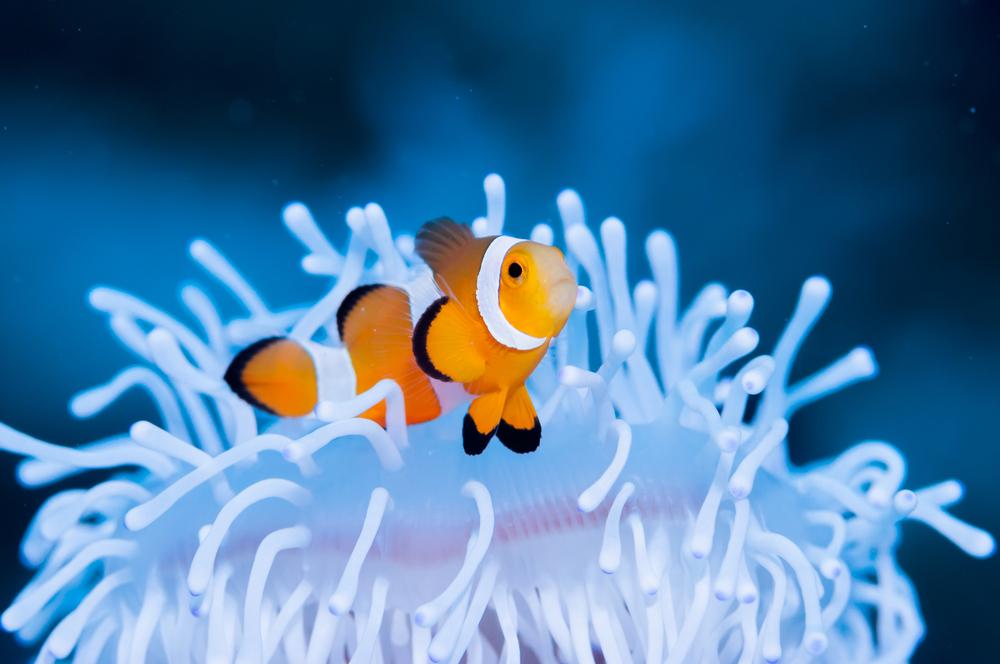 Термостойкие водоросли защитят кораллы от обесцвечивания.Вокруг Света. Украина