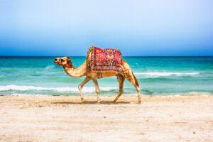 В Тунисе запретили купание в море