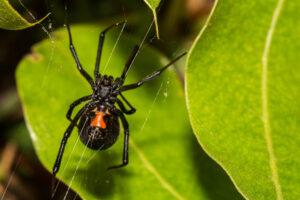 В Боливии дети заставили ядовитого паука покусать их в надежде получить суперсилу