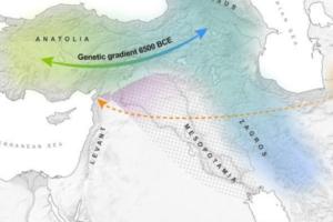 Кости «дамы из колодца» напомнили археологам о давней миграции народов