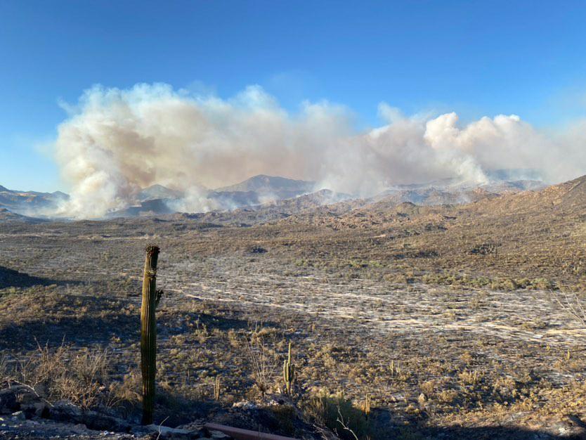 В Аризоне из-за лесных пожаров эвакуировали тысячи людей