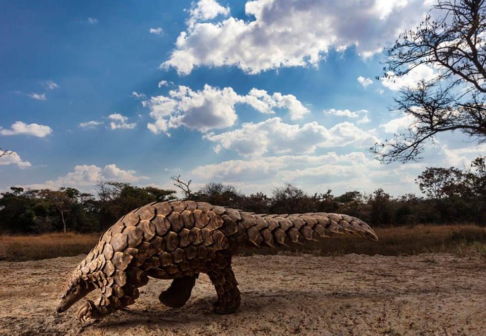 На конкурсе Sony World Photography Awards главной стала тема экологии