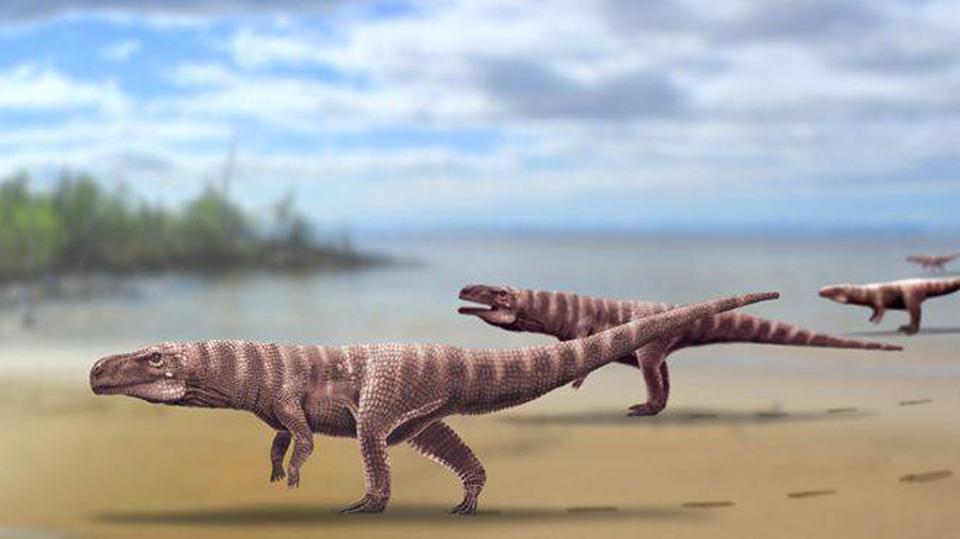 Древние крокодилы бегали на двух ногах, как страусы