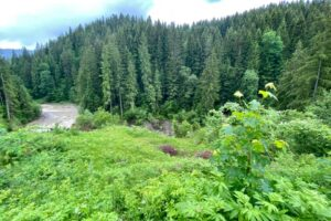 В Карпатах из-за оползня исчезло озеро Кривое