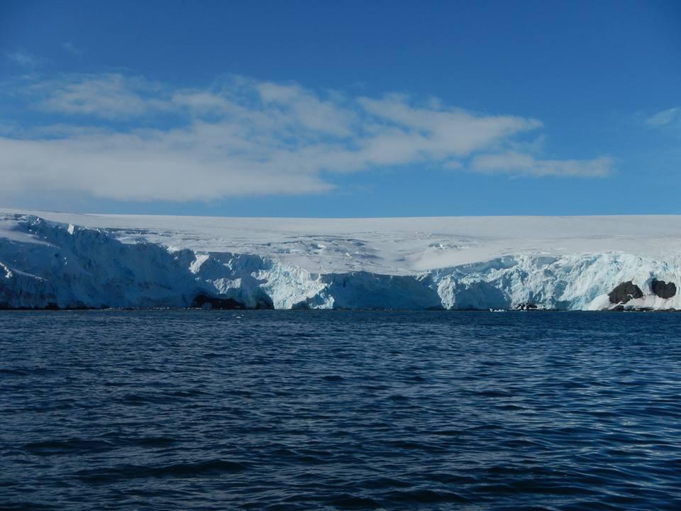 В кишечнике насекомых удаленного острова Антарктики нашли микропластик.Вокруг Света. Украина