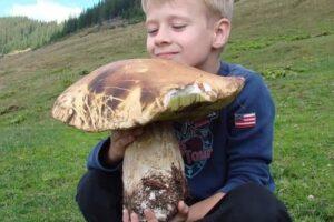 На Закарпатье нашли белый гриб размером с младенца