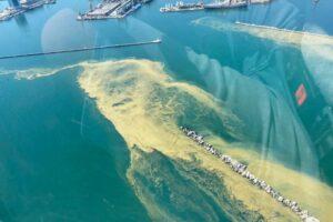 В Одессе из-за загрязнения воды нельзя купаться на пяти популярных пляжах