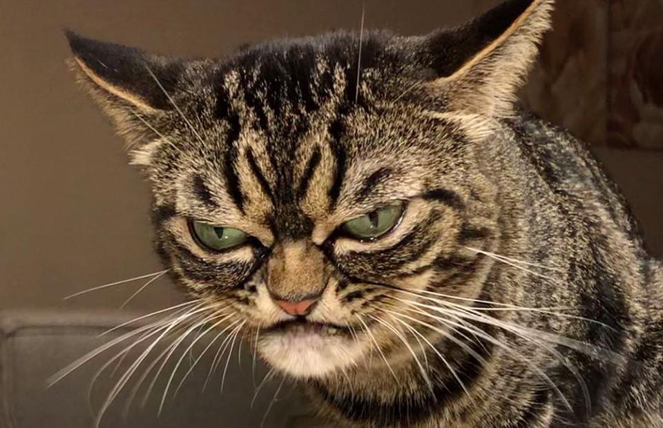 У знаменитой Grumpy Cat появилась преемница
