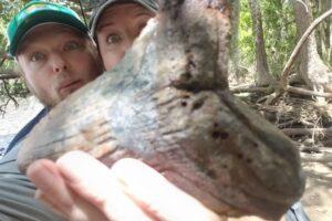 Американка нашла зуб доисторической акулы размером с ладонь