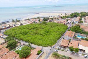 В Бразилии одно дерево занимает целый парк