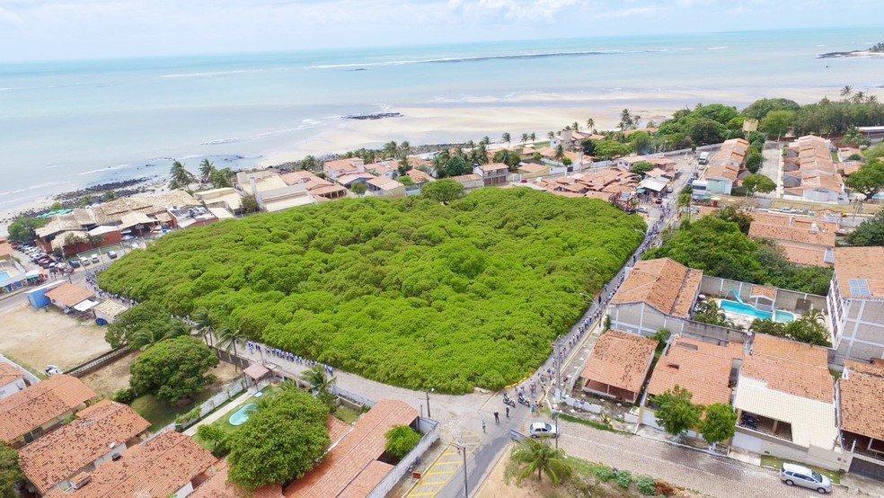 В Бразилии одно дерево занимает целый парк.Вокруг Света. Украина
