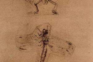 Леонардо да Винчи обладал особым зрением: новое исследование