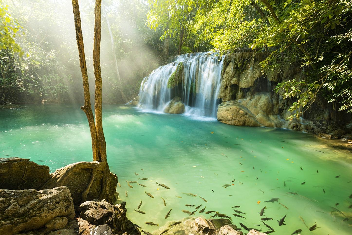 Таиланд будет закрывать национальные парки, чтобы защитить дикую природу.Вокруг Света. Украина
