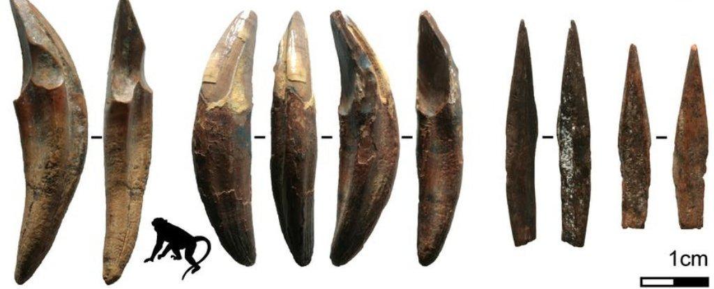 На Шри-Ланке нашли самые старые стрелы в Азии