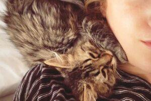 Бельгия и Перу ведут переговоры о депортации кота из-за подозрений в коронавирусе