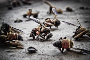 В Хорватии погибли 50 миллионов пчел
