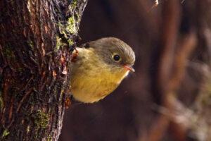 Птицы поют на разных диалектах