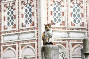 Византийцы любили кошек так же сильно, как мы сегодня