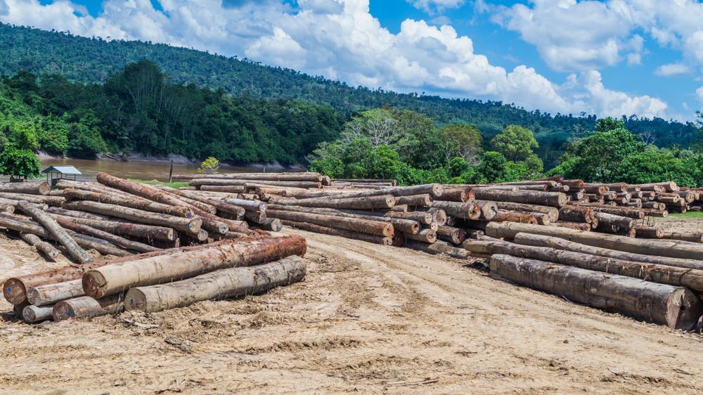 В Индонезии программа против бедности неожиданно спасла лес