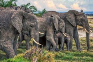 В Эфиопии  произошло самое массовое убийство слонов в истории