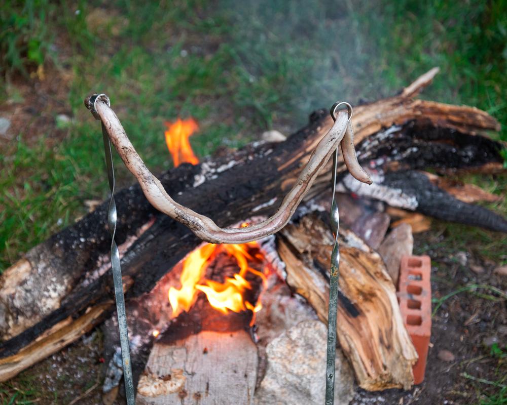 Люди 15 тысяч лет назад научились готовить змей и ящериц