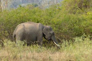 Индиец завещал участок двум слонам