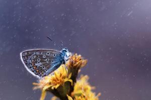 Почему бабочки не боятся сильных ливней