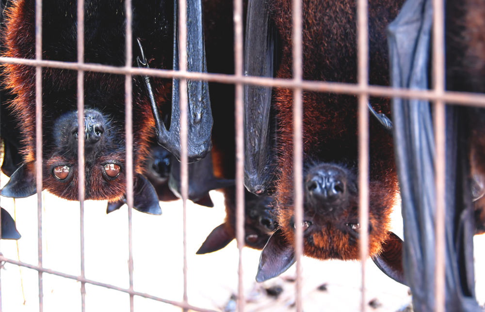 Торговля дикими животными стала инкубатором болезней – исследователи.Вокруг Света. Украина
