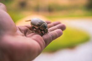 На Шри-Ланке судят троих россиян за незаконный сбор насекомых