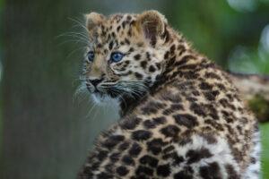 Шестое массовое вымирание видов резко ускорилось
