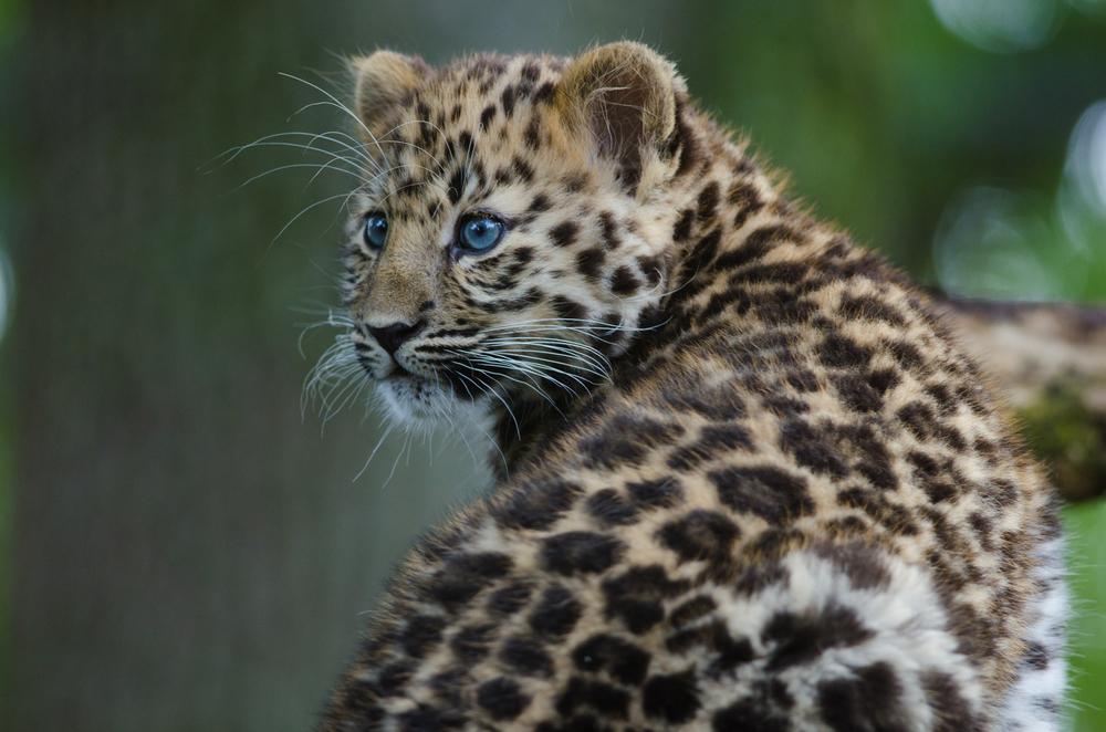 Шестое массовое вымирание видов резко ускорилось.Вокруг Света. Украина