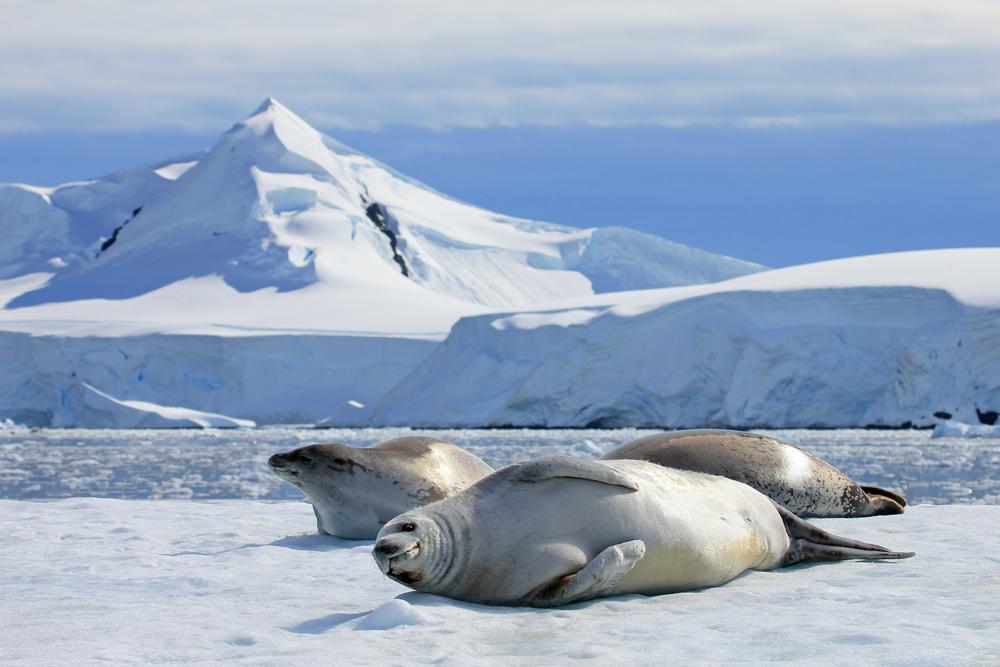 Когда-то льды Антарктиды таяли в 10 раз быстрее, чем сегодня.Вокруг Света. Украина