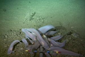 Глубочайшая морская впадина загрязнена ртутью