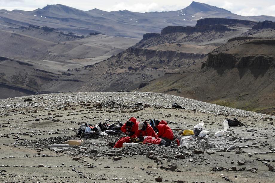 В Чили обнаружены зубы млекопитающего, которым 74 млн лет