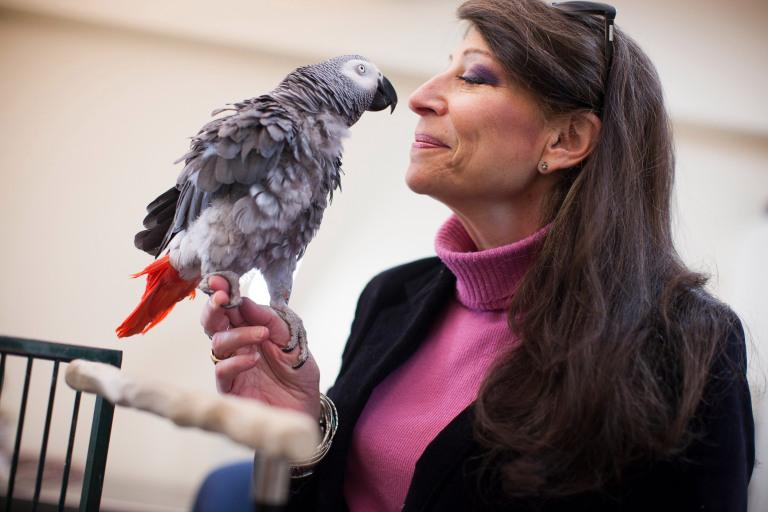 Попугай справился с тестом на память лучше, чем студенты Гарварда.Вокруг Света. Украина