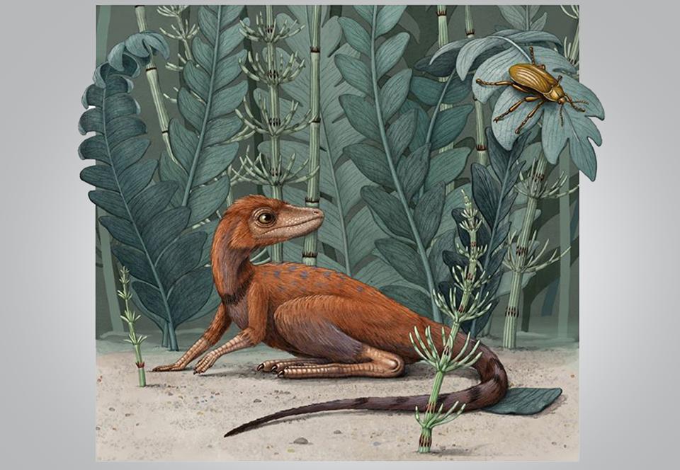 На Мадагаскаре нашли крошечного предка динозавров