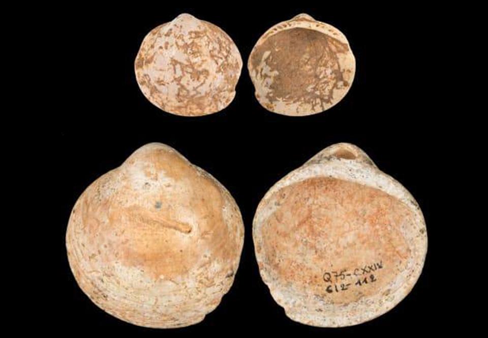 Люди носили бусы из ракушек 120 тысяч лет назад