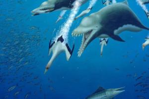 Древний дельфин-великан охотился, как косатка