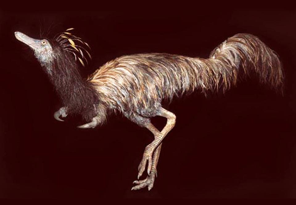 В США обнаружили останки динозавра - лапы с одним когтем.Вокруг Света. Украина