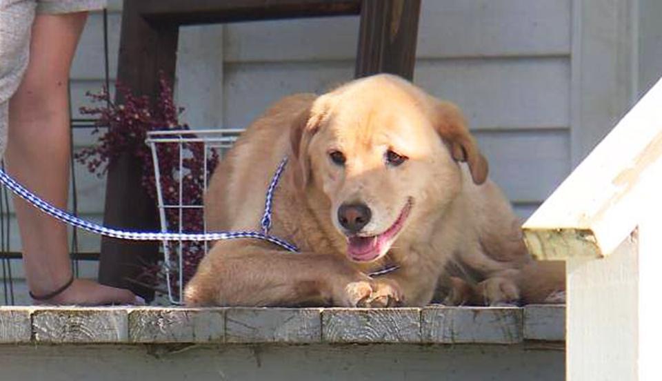 Сбежавшая собака преодолела 92 км, чтобы навестить старый дом.Вокруг Света. Украина