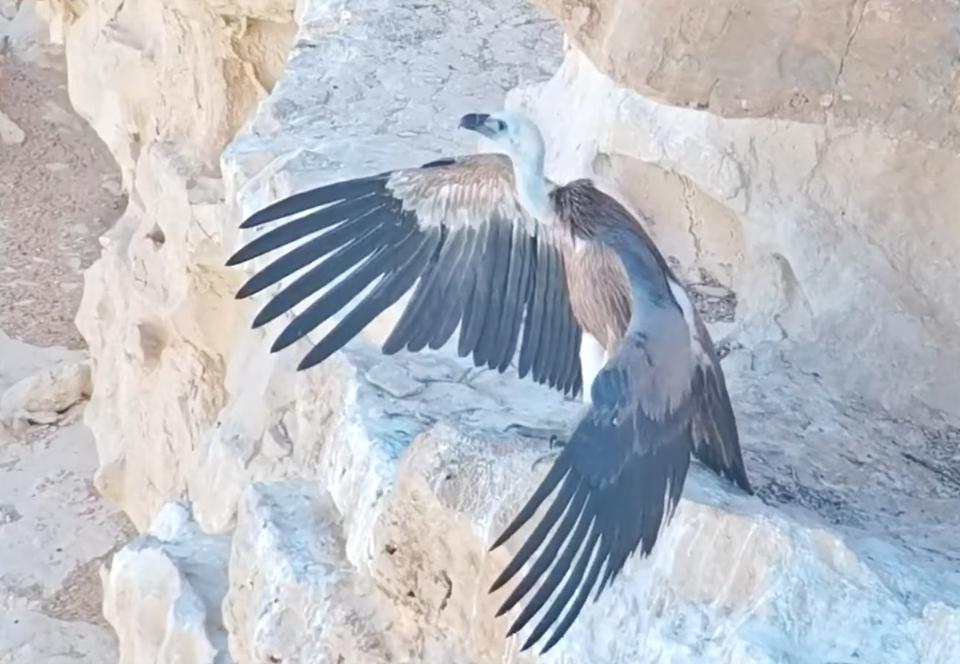 В Израиле дрон спецназа помог выкормить осиротевшего птенца