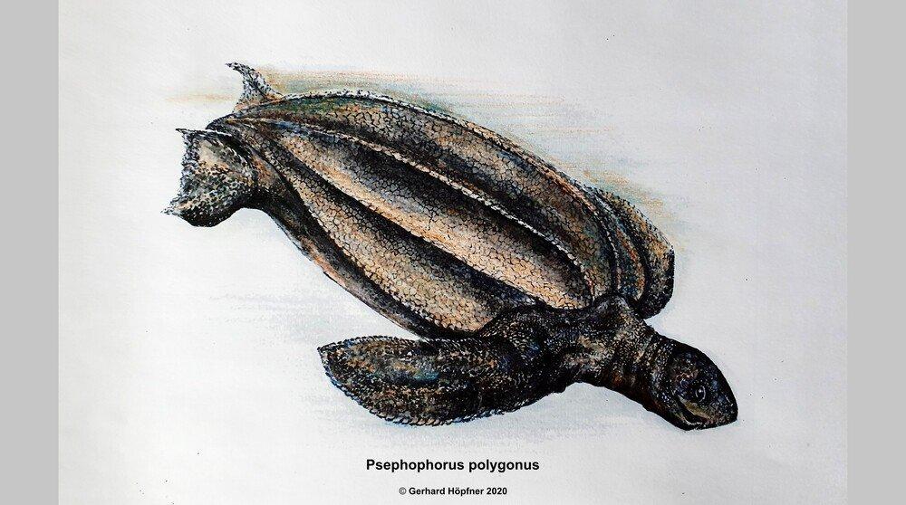 В Германии нашли черепаху возрастом 11 млн лет