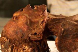 Египтологи выяснили причину смерти «кричащей мумии»