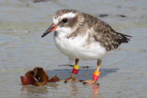 В Новой Зеландии бесследно исчезла целая колония редких птиц