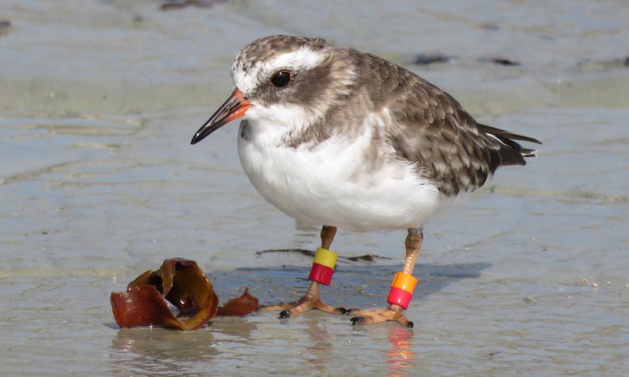 В Новой Зеландии бесследно исчезла целая колония редких птиц.Вокруг Света. Украина