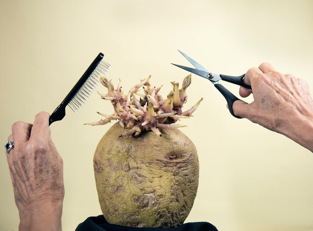 лучшее фото картошки
